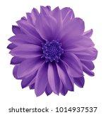 Dahlia Violet Blue Flower  On ...