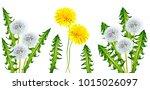 fluffy dandelion flower... | Shutterstock . vector #1015026097