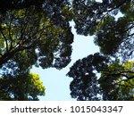tree blue sky  tree top against ... | Shutterstock . vector #1015043347