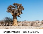One Quiver Tree In The...