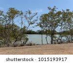 Small photo of Unare Lagoon Anzoategui - Venezuela