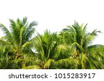 tropical coconut palm tree... | Shutterstock . vector #1015283917