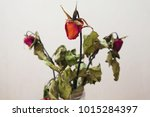 Dried Roses In A Vase On The...
