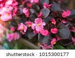 flowers at light leak . image... | Shutterstock . vector #1015300177