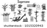 sugar cane icons vector.   Shutterstock .eps vector #1015320943