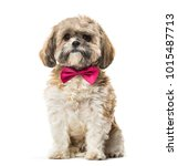 Stock photo lhasa apso in bow tie against white background 1015487713