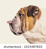 profile of a english bulldog... | Shutterstock . vector #1015487833