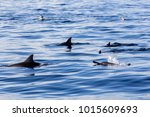 dolphins at black river ... | Shutterstock . vector #1015609693