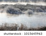 trees and reeds are covered... | Shutterstock . vector #1015645963