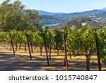 napa valley california vineyard ... | Shutterstock . vector #1015740847