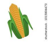 fresh corn isolated | Shutterstock .eps vector #1015806673