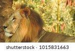 lion looking regal standing ... | Shutterstock . vector #1015831663