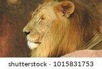 lion looking regal standing ... | Shutterstock . vector #1015831753