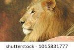 lion looking regal standing ... | Shutterstock . vector #1015831777