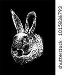 graphical portrait of bunny... | Shutterstock .eps vector #1015836793