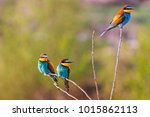 three colored birds sit on thin ... | Shutterstock . vector #1015862113