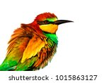 spring colored bird isolated on ... | Shutterstock . vector #1015863127