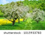 Apple Tree Alley In White...