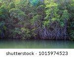 mangroves  queensland  australia | Shutterstock . vector #1015974523