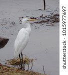 Small photo of Soft focus photo of an American egret poised beside a lake in winter; Green Valley Park in Payson, Arizona