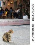 cat in narrow lane of plaka ...   Shutterstock . vector #1016091403