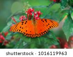 Small photo of Agraulis vanilae, butterfly