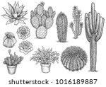 cactus nad succulent... | Shutterstock .eps vector #1016189887