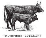 ancient,animal,antique,art,artwork,auvergne cattle,background,black,breed,calf,cow,domestic,domesticated,drawing,engraved