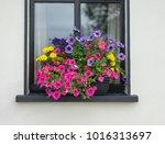 beautiful floral window box.   Shutterstock . vector #1016313697