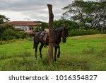 beautiful horse waiting... | Shutterstock . vector #1016354827