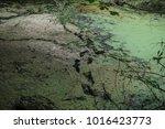 an animal's footprints in a...   Shutterstock . vector #1016423773