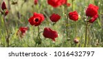 close up view of spectacular ... | Shutterstock . vector #1016432797