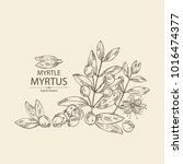 myrtus  myrtle  myrtus branch...   Shutterstock .eps vector #1016474377