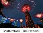 supertree grove forest... | Shutterstock . vector #1016496823