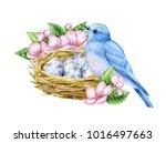 cute little blue bird with nest ... | Shutterstock . vector #1016497663