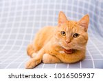 cute red cat   Shutterstock . vector #1016505937