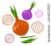 bright vector set of colorful... | Shutterstock .eps vector #1016512507