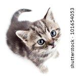 Stock photo little baby kitten looking upwards top view 101654053