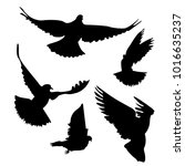 silhouette of flying pigeons.... | Shutterstock .eps vector #1016635237