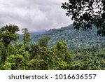 rainforest  far north... | Shutterstock . vector #1016636557