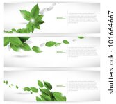 eps10 vector set of leaf... | Shutterstock .eps vector #101664667