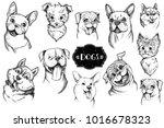 dog face hand drawn set. vector ...   Shutterstock .eps vector #1016678323