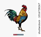 Hand Drawn Rooster Isolated....