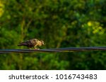 close up group of pigeon were...   Shutterstock . vector #1016743483