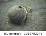underwater world   adult... | Shutterstock . vector #1016752243