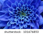 Beautiful Blue Flower Image Fo...