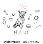 vector  illustration. chihuahua ... | Shutterstock .eps vector #1016796457