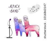 cute llamas  alpacas. the... | Shutterstock .eps vector #1016863147