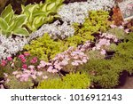 a variety of plants in a... | Shutterstock . vector #1016912143