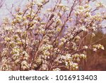 branches with white flowers in... | Shutterstock . vector #1016913403